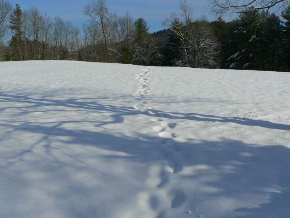 Snowshoe Tracks, photo by Roger Vincent Jasaitis, Copyright RVJart.com