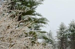 Ice Storm, Photo by Roger Vincent Jasaitis, Copyright 2016, RVJart.com